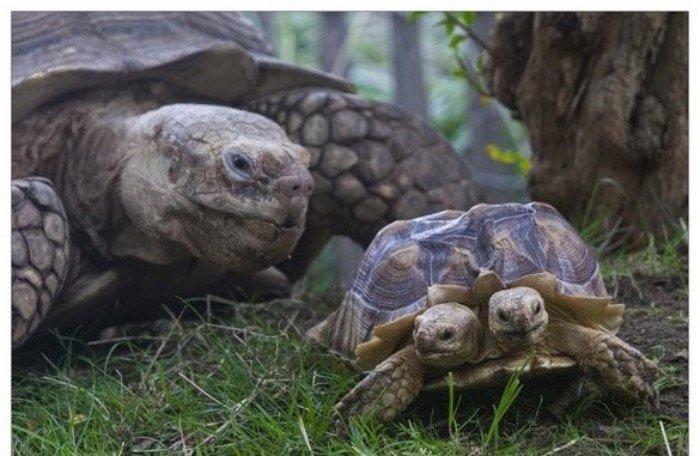 Мутанты среди животных: страх, жалость и сочувствие