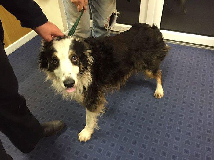 Пропавший пес за 2 месяца преодолел 80 км, чтобы найти хозяйку