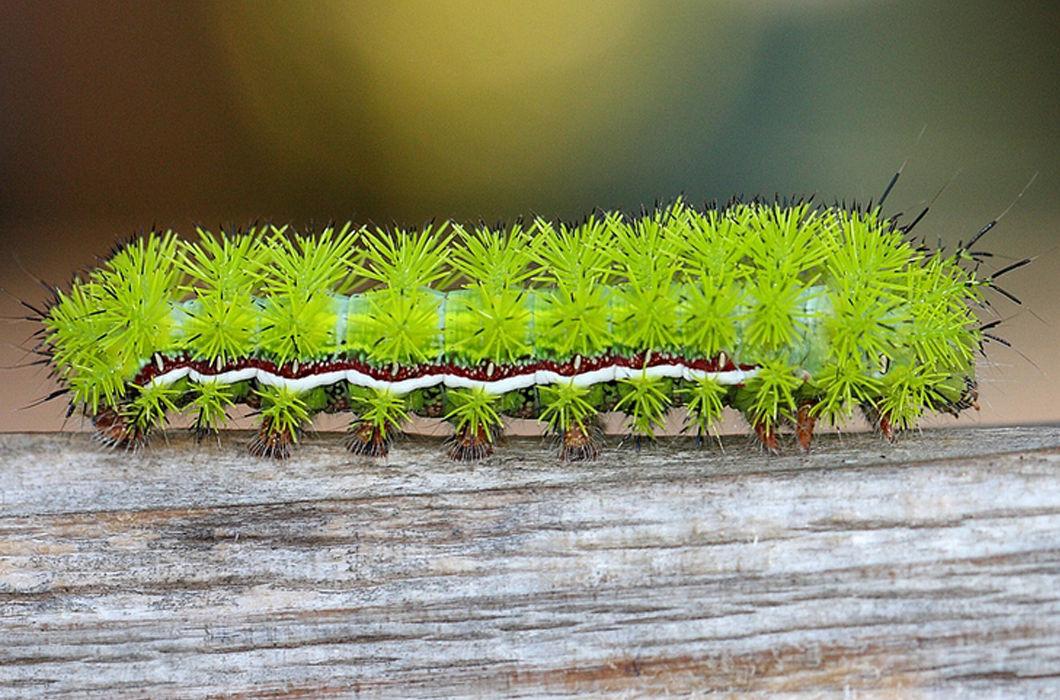 картинки редких гусениц покупных материалов