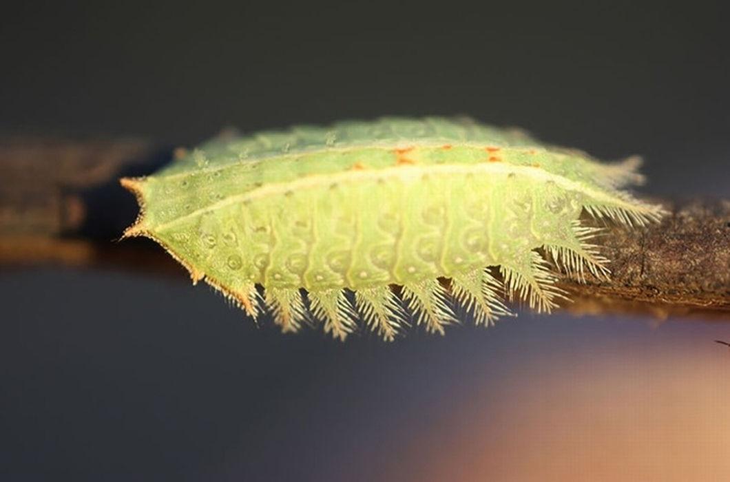 Сказочные превращения гусениц: до и после