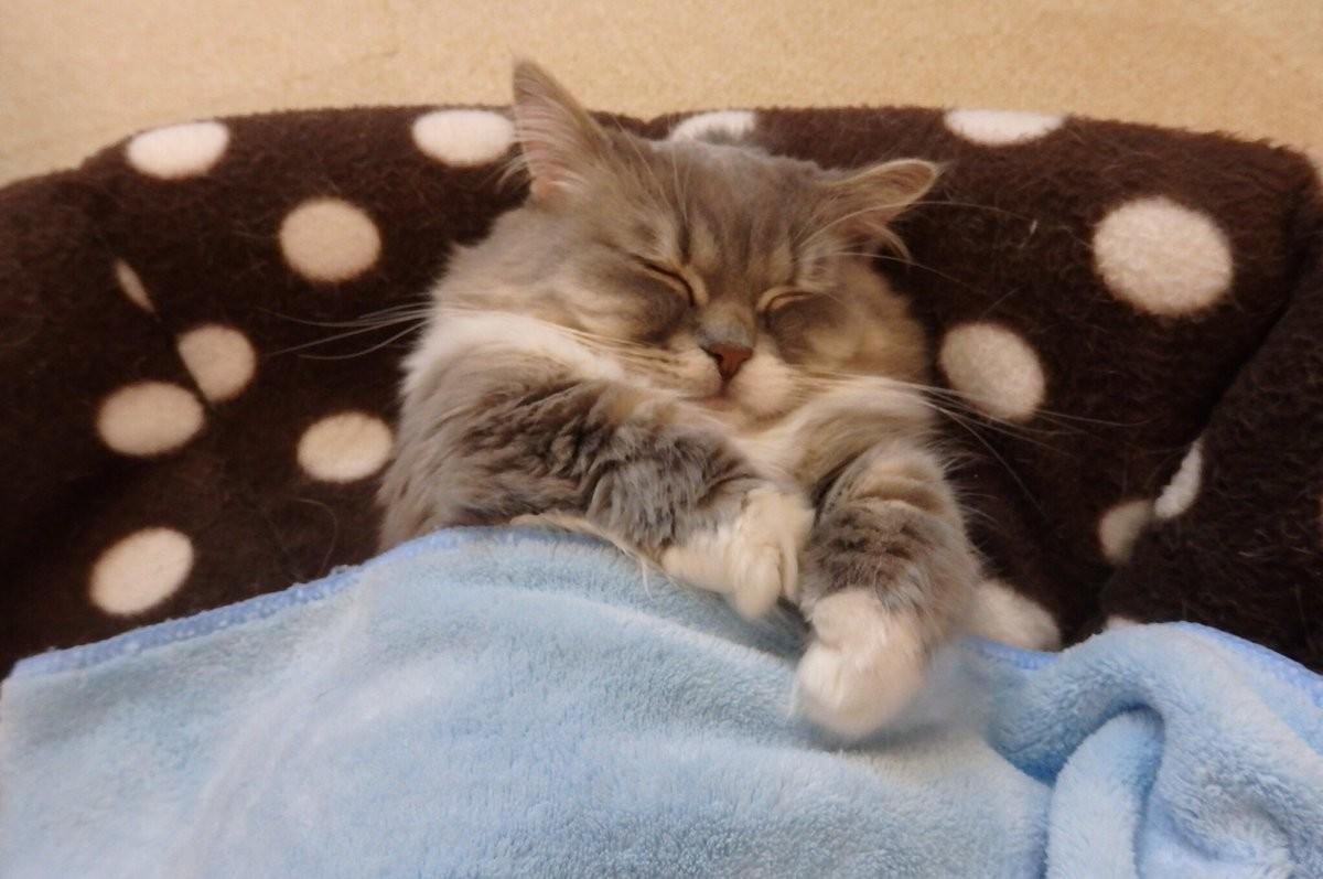 Картинки кошки спят в кроватках