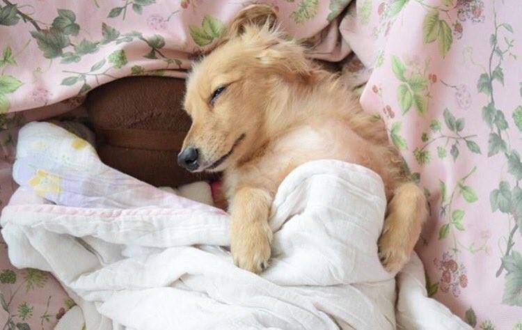 Котики спят в кроватях как люди: флешмоб из Японии