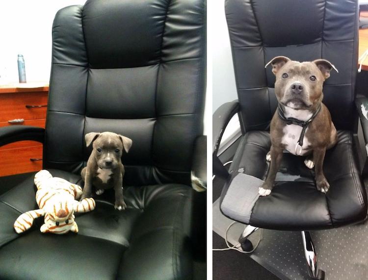 Кто вырастает из милых щенков: до и после