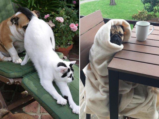 Собаки, которые просто вымотались за день