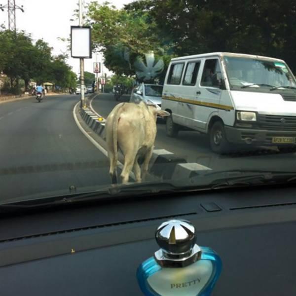 Прикольные фото из Индии