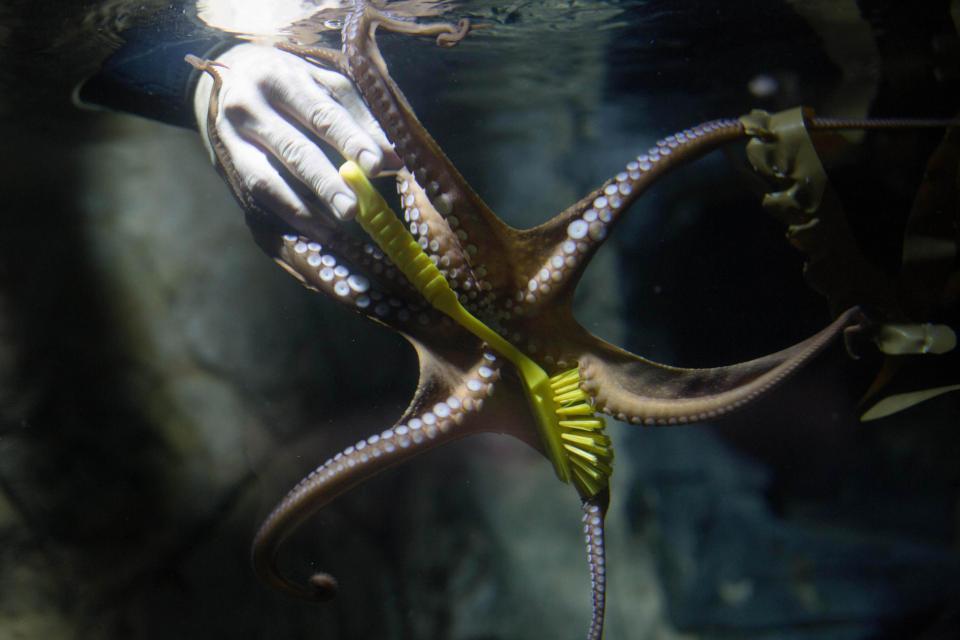 Чистка аквариумов с хищниками