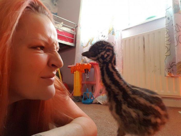 Девушка купила яйцо и высидела страуса эму