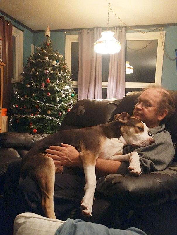 Когда папа говорил, что не хочет собаку
