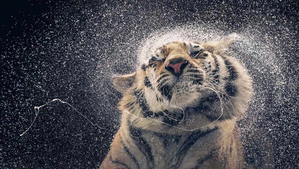 Удивительные портреты животных от Тима Флэка