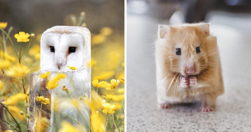Животные в квадратном мире Minecraft
