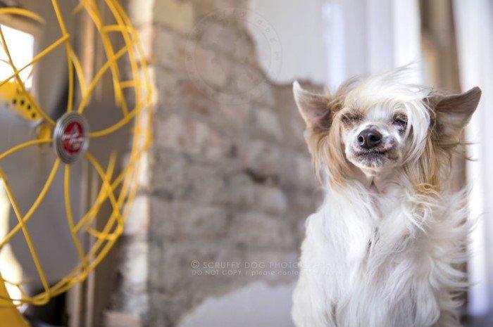 Собаки и вентиляторы