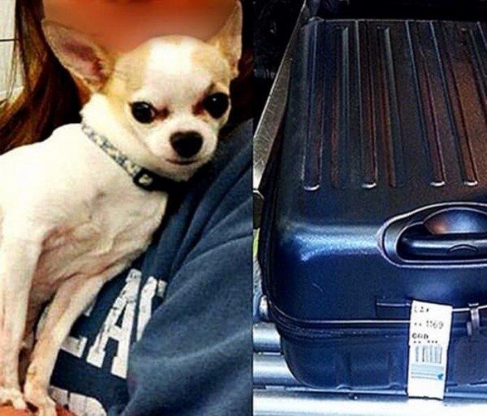 Самые странные находки службы безопасности в аэропортах