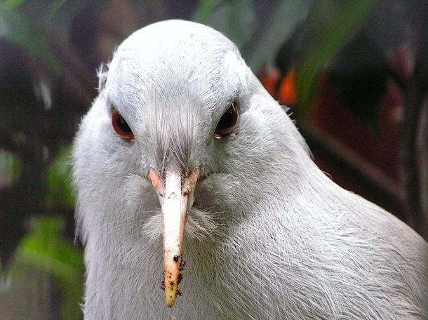 25 самых редких птиц в мире