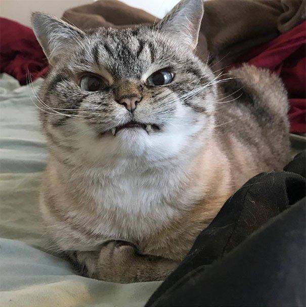 Сердитые животные