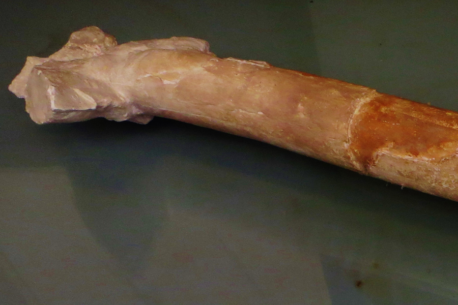 Трансильванские птерозавры оказались вампирами