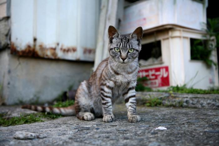 7 мест на Земле, где кошки чувствуют себя как в раю
