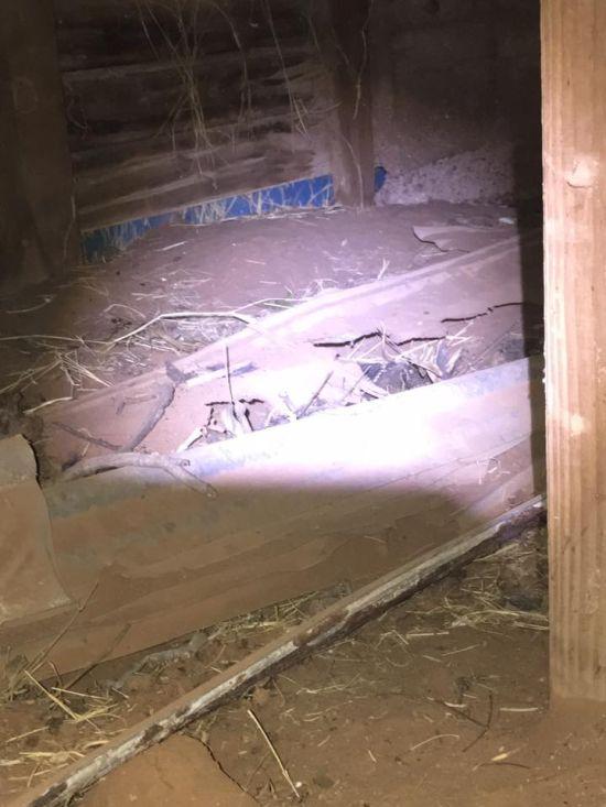 Житель Техаса обнаружил в своем доме змеиное логово
