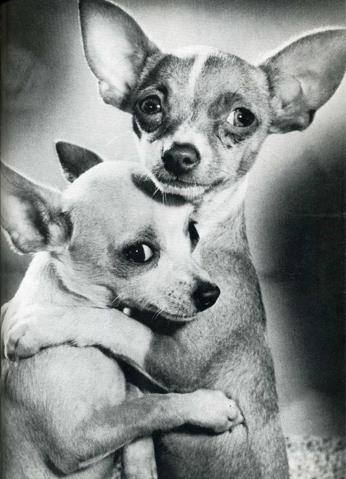Фотографии из американских журналов 50-60-х годов