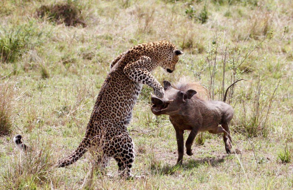 Охота летающего леопарда