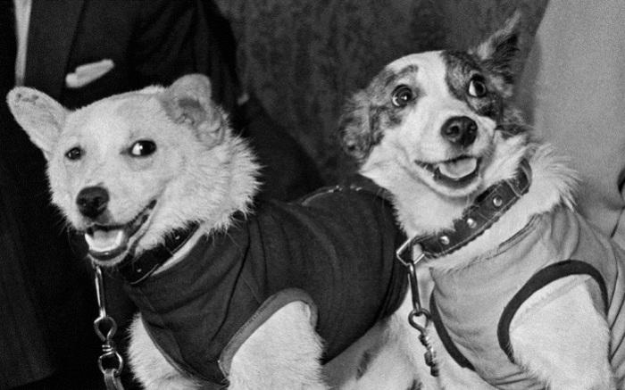 Животные, которые вызывали умиление всего Советского Союза