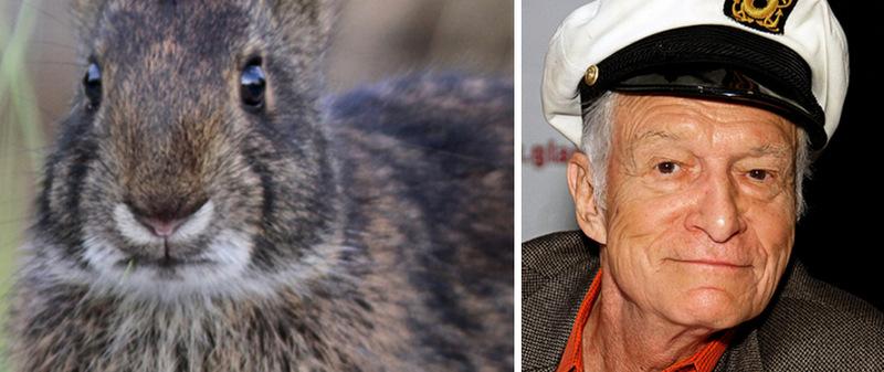 Животные с именами знаменитостей