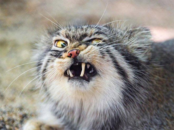 Милые чихающие кошки