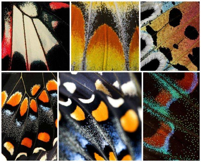 Жизнь вблизи: красота и геометрия природы