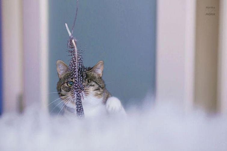 Фотографии котов-инвалидов, которые всё также прекрасны
