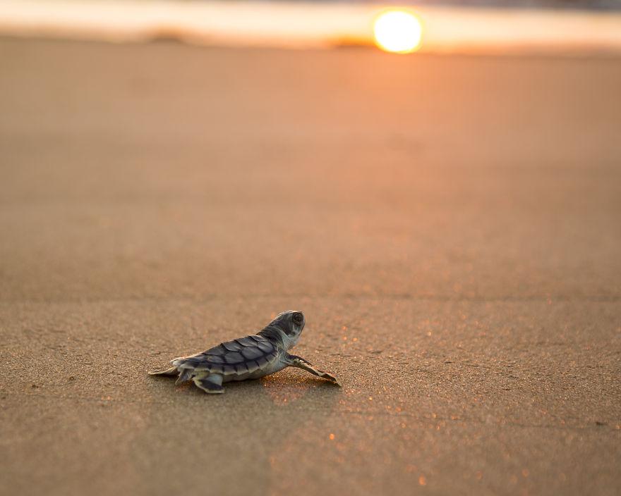 Британский фотограф 9 месяцев путешествовал по Австралии