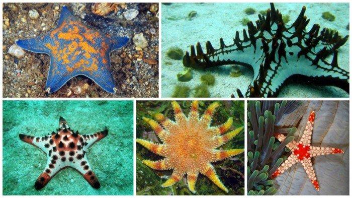 Красивые и необычные морские звезды
