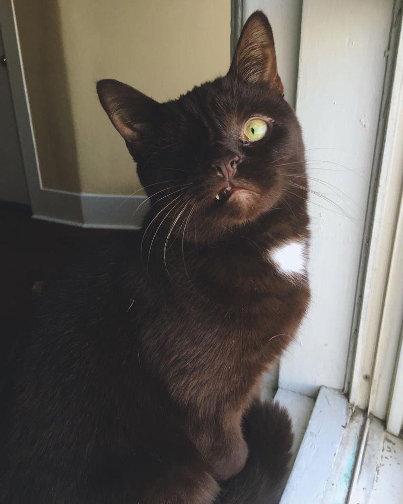 Кот-пират с устрашающим видом и добрым сердцем