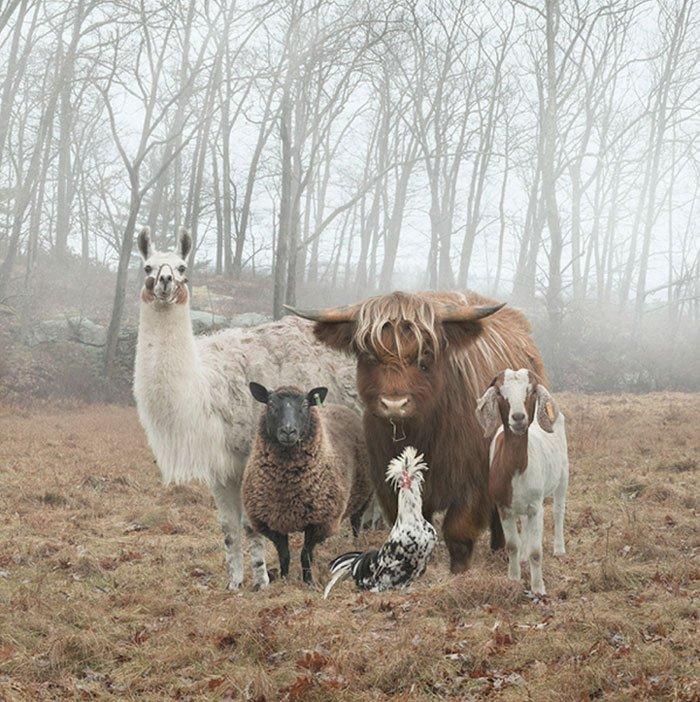 Стильные животные выглядят как с обложки музыкального альбома
