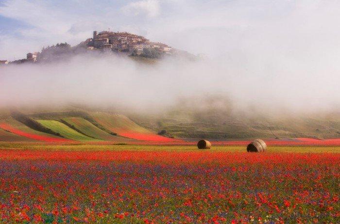 Разноцветная природа на фотографиях