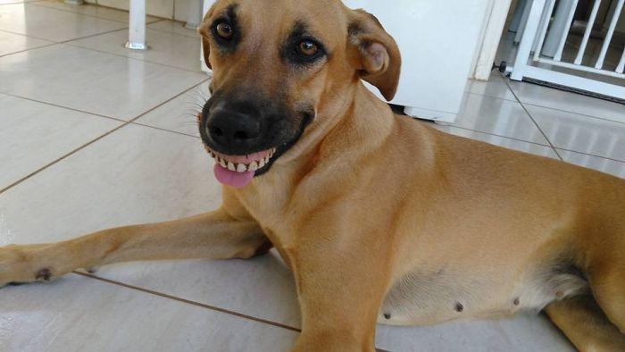Собака обновила свою улыбку