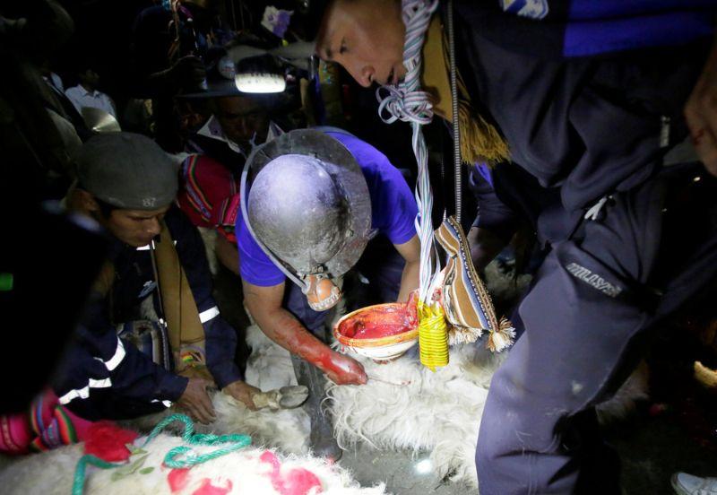 Боливийские шахтеры приносят в жертву злому духу алкоголь, коку, сигареты и лам