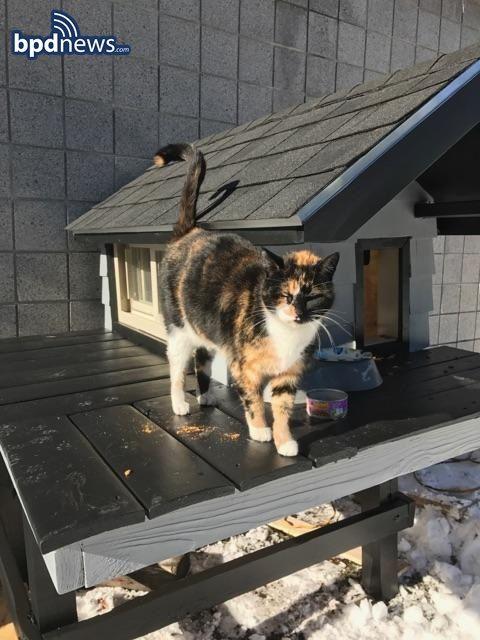 Бостонский спецназ построил крутой дом для своей кошки