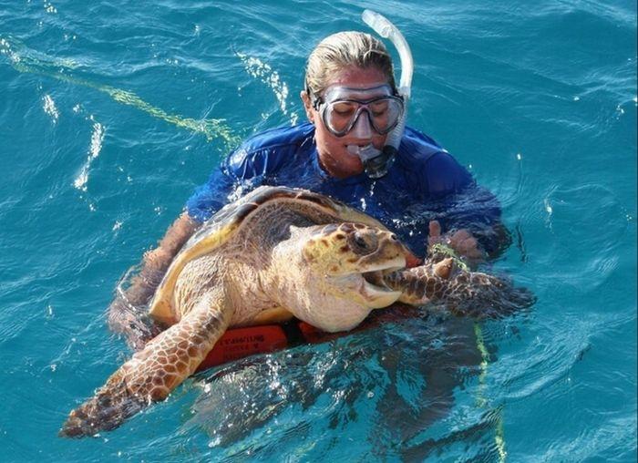 Рыба фугу против морской черепахи
