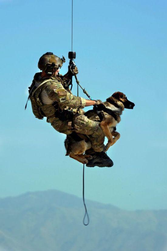 Служебные собаки на работе