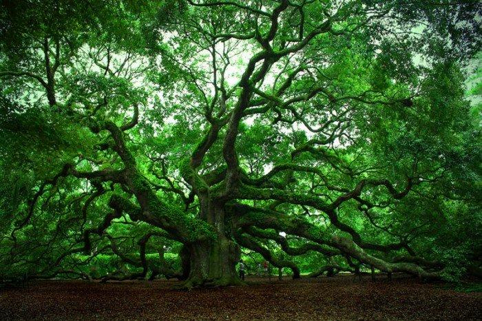 10 необычных способов погребения со всех уголков мира