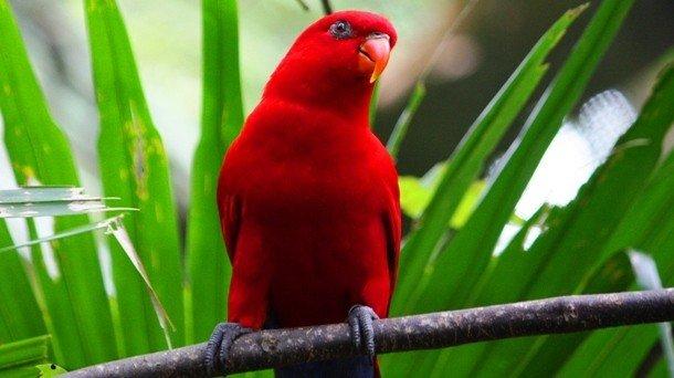 25 животных красного цвета