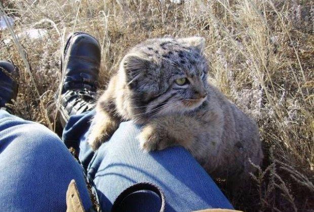Фермер подобрал необычных котят