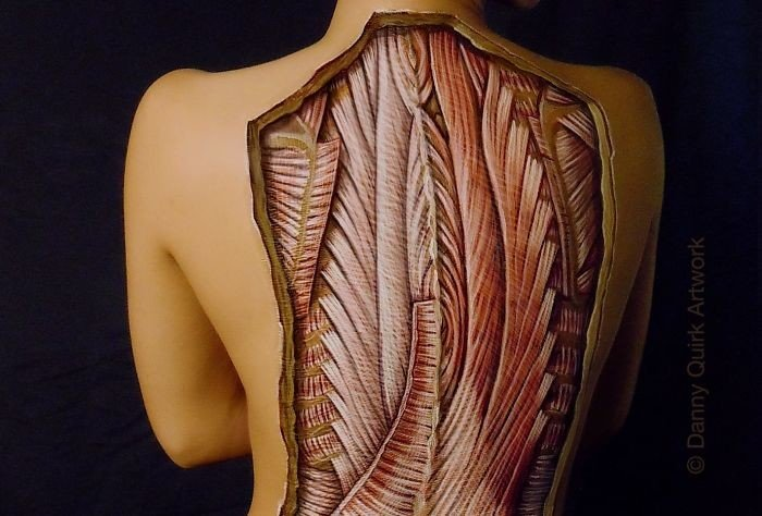 Анатомические рисунки на телах