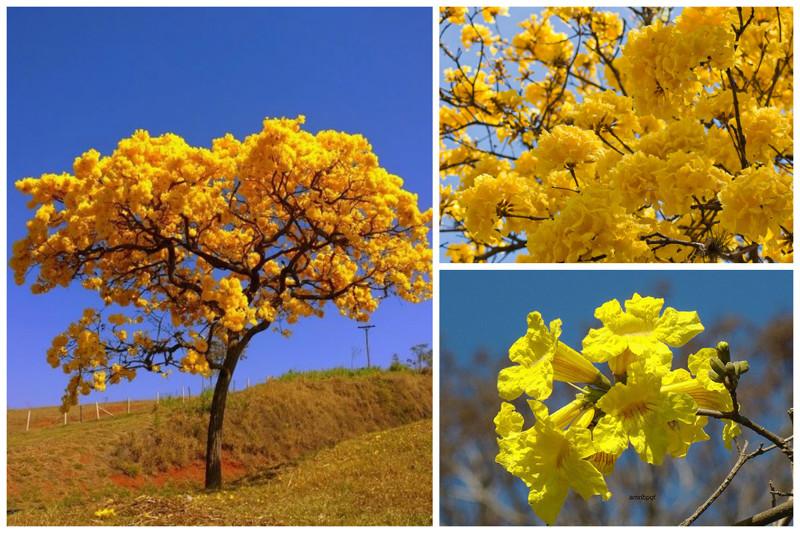 Цветение эвкалипта, баобаба и другие чудеса природы