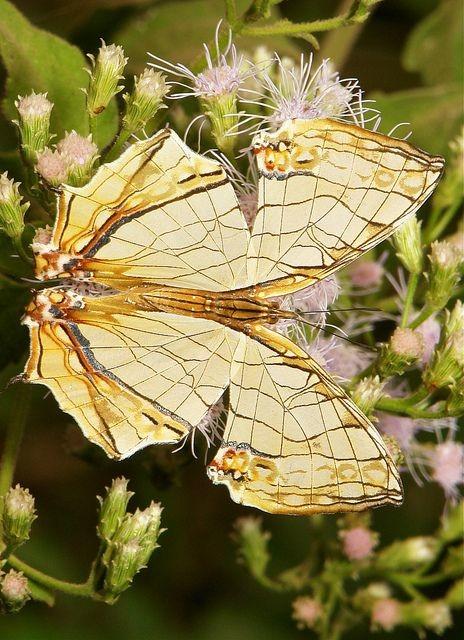 Эти невероятные создания: бабочки