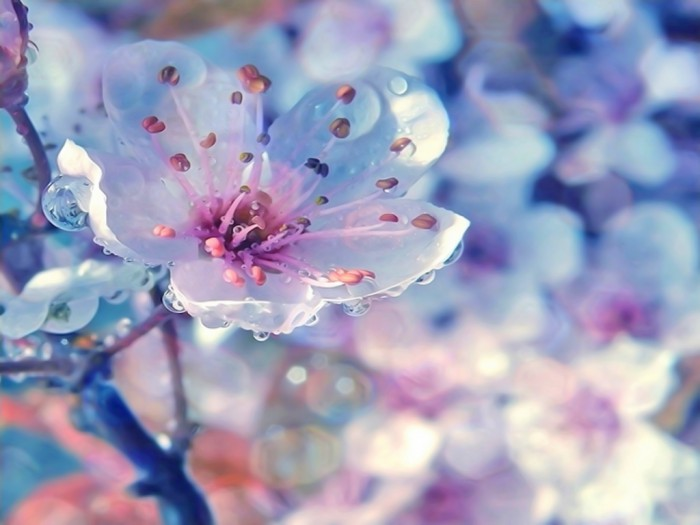 Красота весенней природы
