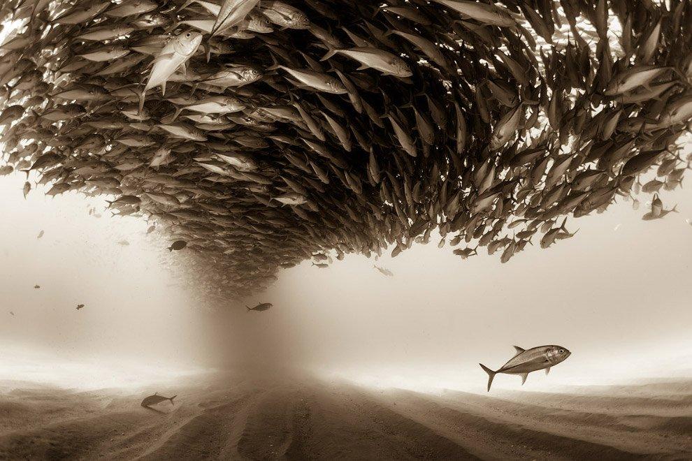 Лучшие работы фотоконкурса Sony World Photography Awards 2017