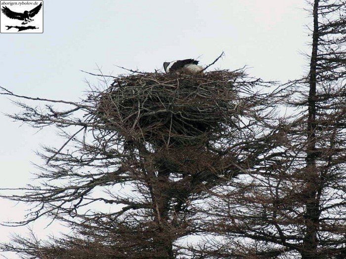 Нереальное птичье строительство