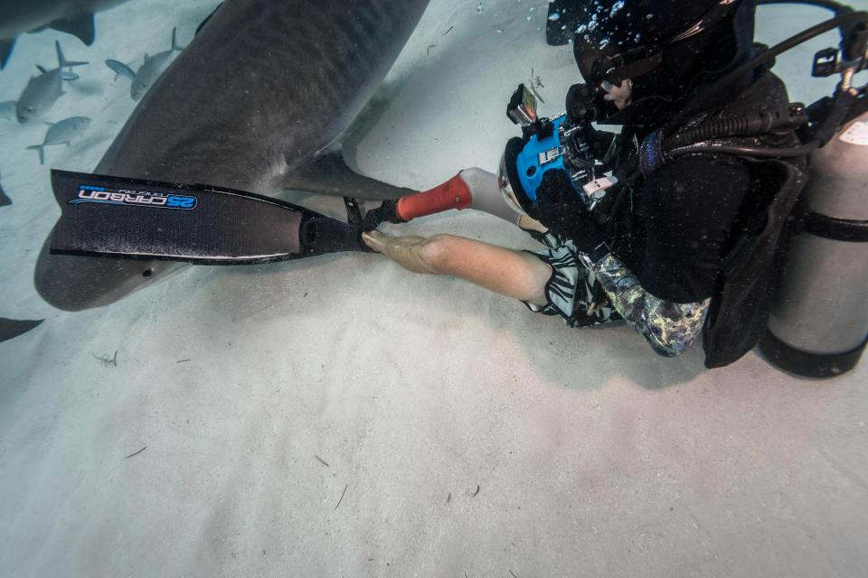 Невероятные кадры дайверов с четырехметровыми акулами