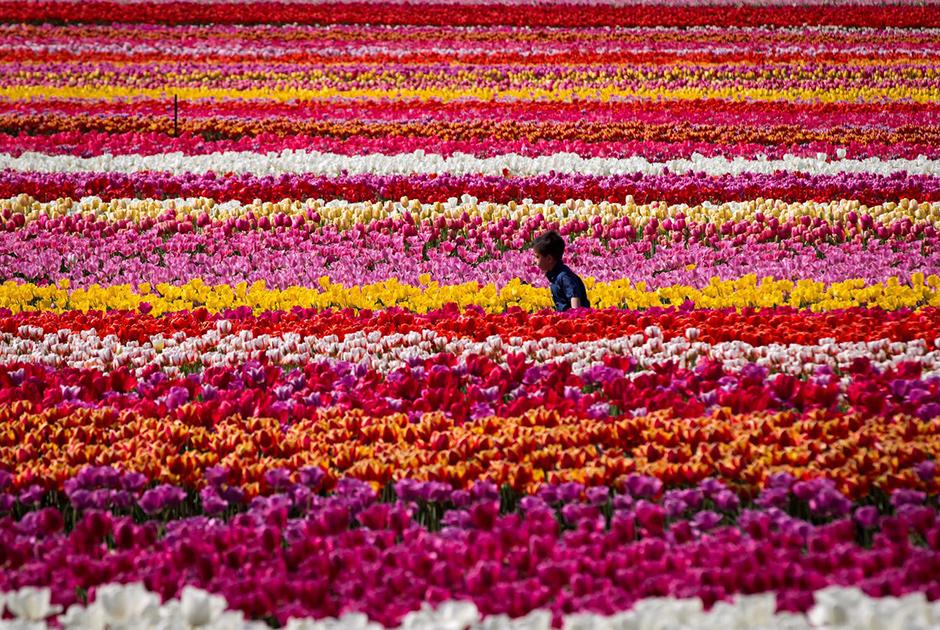 Как встречают весну в разных странах мира