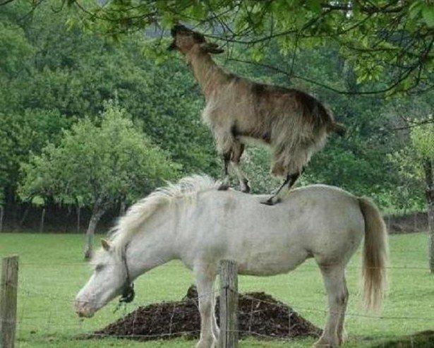 Забавные снимки о помощи среди людей и животных